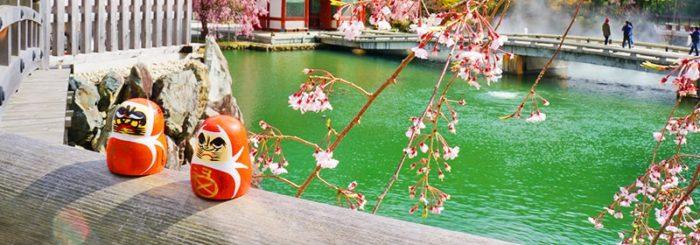 桜が散るころに咲く勝尾寺の桜の様子