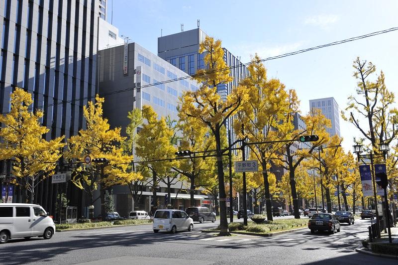 黄色く色づいたイチョウが美しい秋の御堂筋