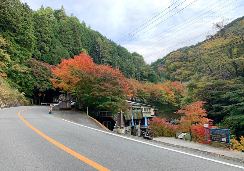 金剛山に行くまでの道中にある紅葉