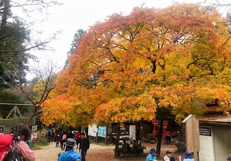 紅葉が綺麗な金剛山の登山口