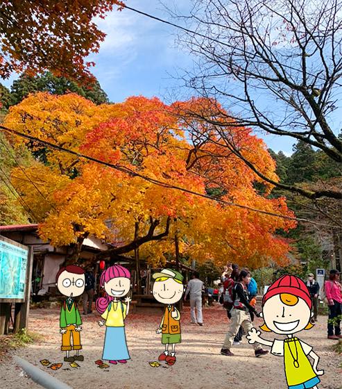 秋の金剛山で登山を楽しむ人々