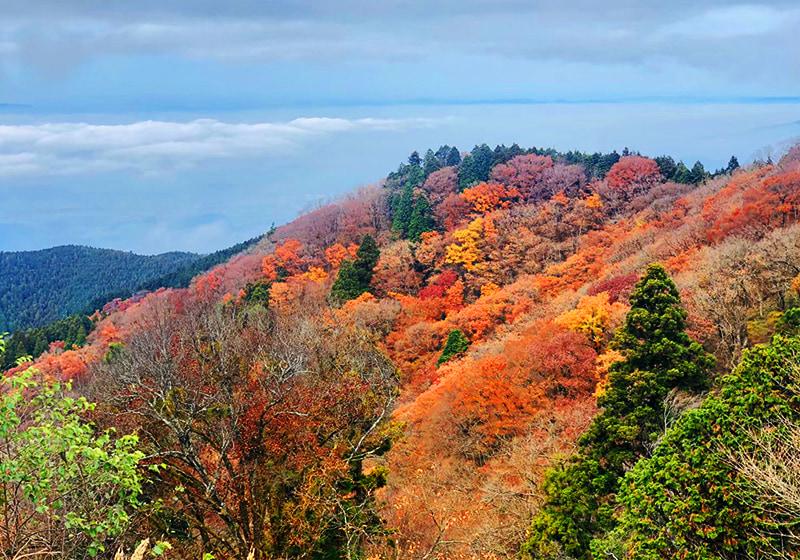 秋の金剛山