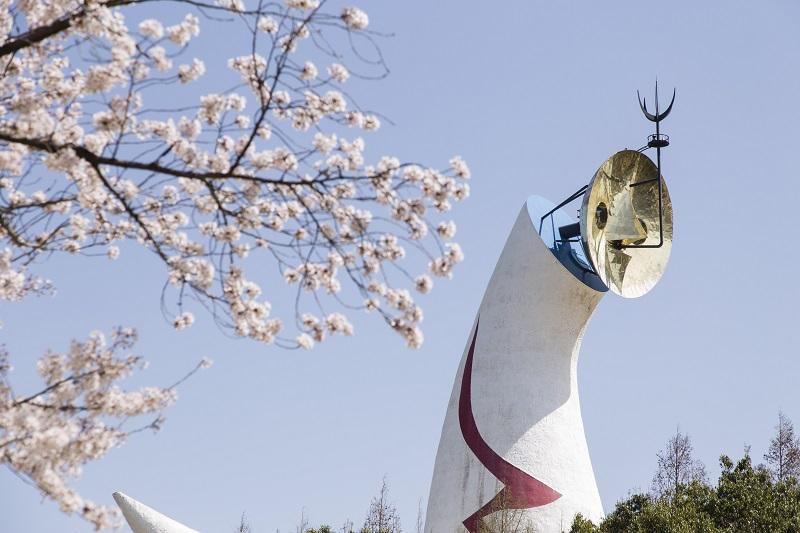太陽の塔と桜のコラボ
