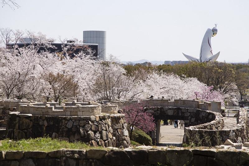 日本さくら名所100選にも選ばれた万博記念公園