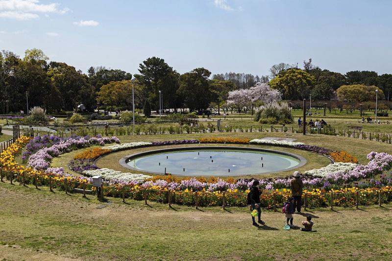 桜や春の花で彩られた服部緑地の円形花壇