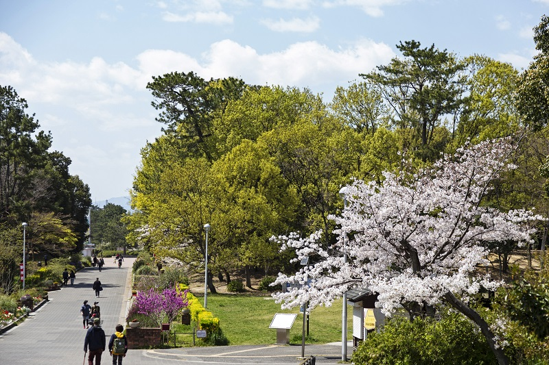 自然の中に溶け込む桜が美しい服部緑地
