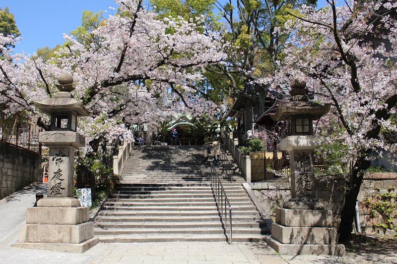 高津宮の桜に包まれた参道