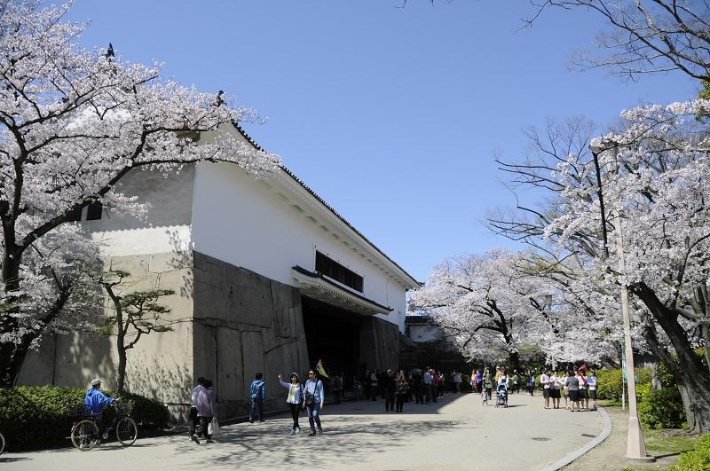 大阪城の石垣と桜