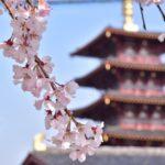 大阪四天王寺と桜