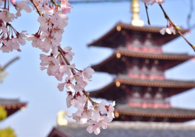 Cherry Blossom Season in Japan<br> 9 Amazing Osaka Hotspots