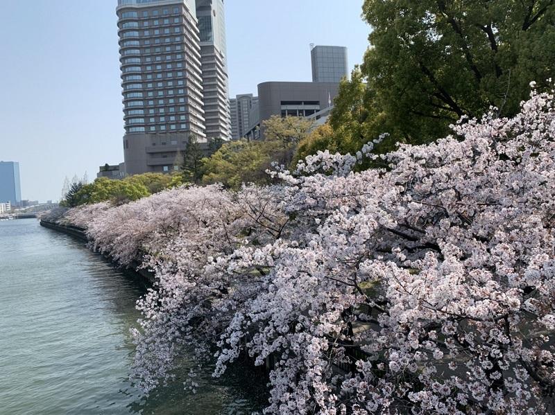 毛馬桜之宮公園の桜の風景