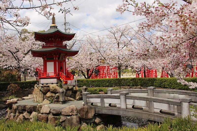 桜に囲まれた亀遊嶋辯天堂