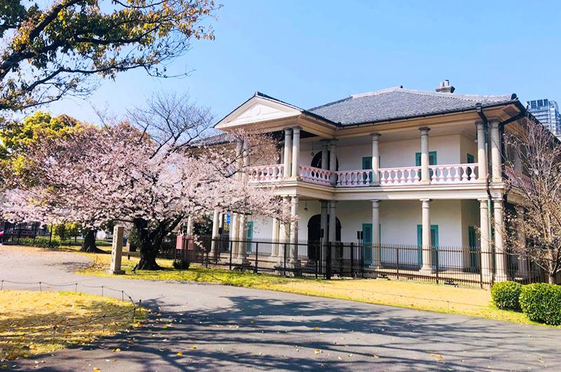 泉布観の桜