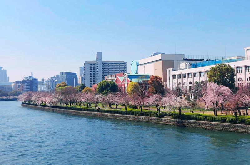 大川と桜がとってもきれい