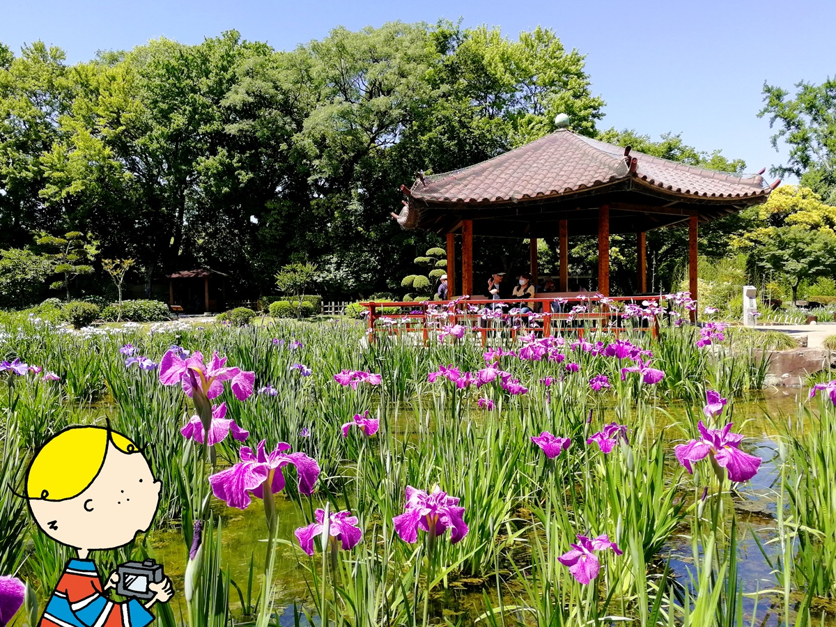 Japanese irises in bloom at Shirokita Park Syoubuen filling the pond in shades of pink, purple, and white. A couple sits in a pagoda in the background.