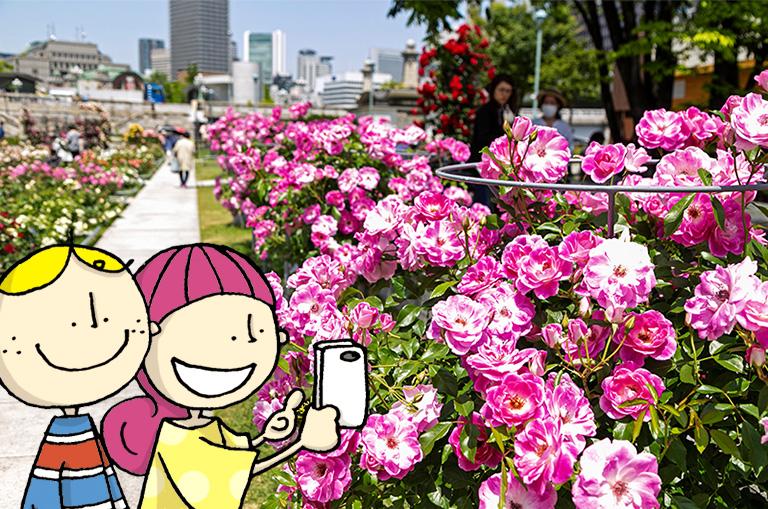 中之島公園のピンクのバラ