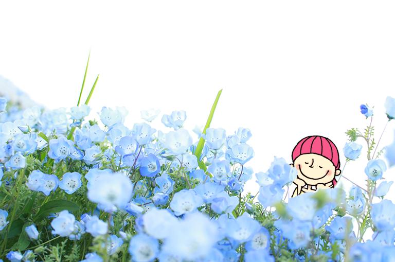 舞洲ネモフィラ祭りのネモフィラの花とOsaka Bobファミリーのユカ