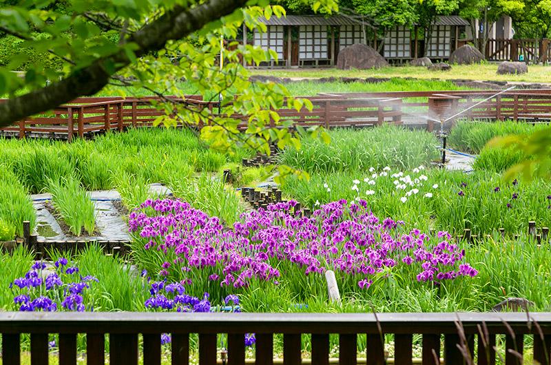 山田池公園の花ちょうぶ園