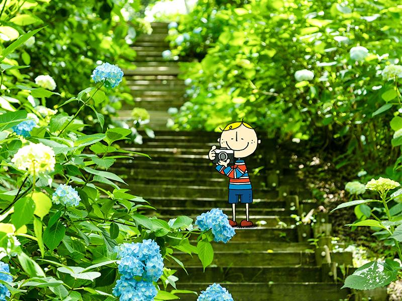ぬかた園地のあじさいプロムナードの写真を撮る大阪ボブ