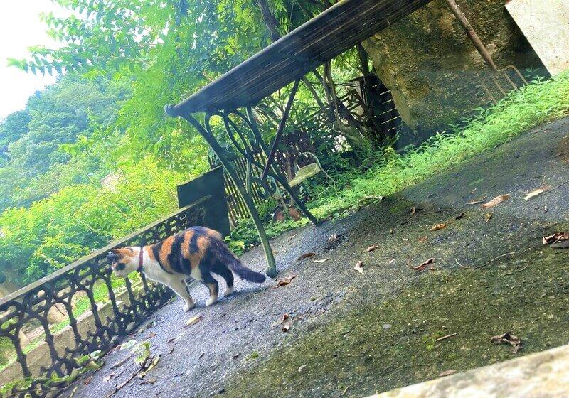 ドゥリムトン村の看板猫
