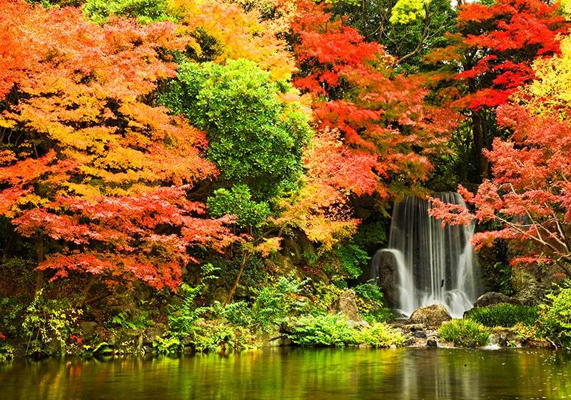 万博記念公園内の秋の紅葉が美しい日本庭園