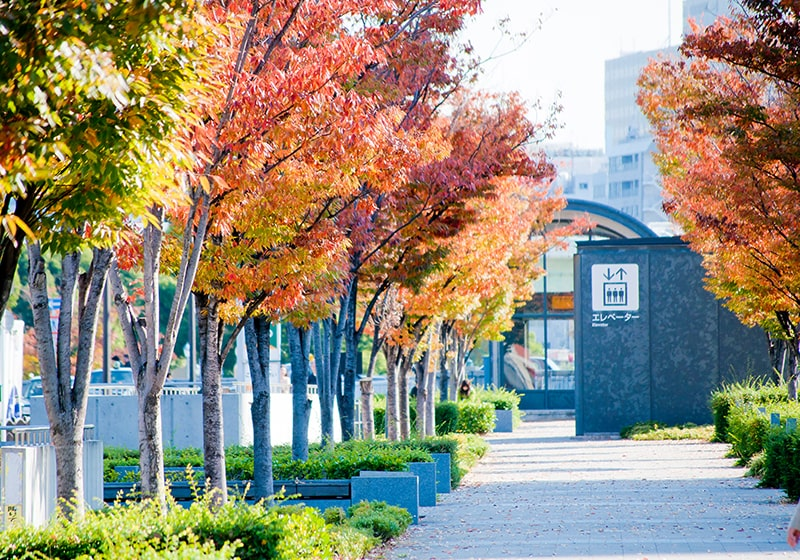 秋の大阪中之島